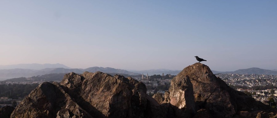 A bird perched on the rocks of Tank Hill overlooking the city of San Francisco