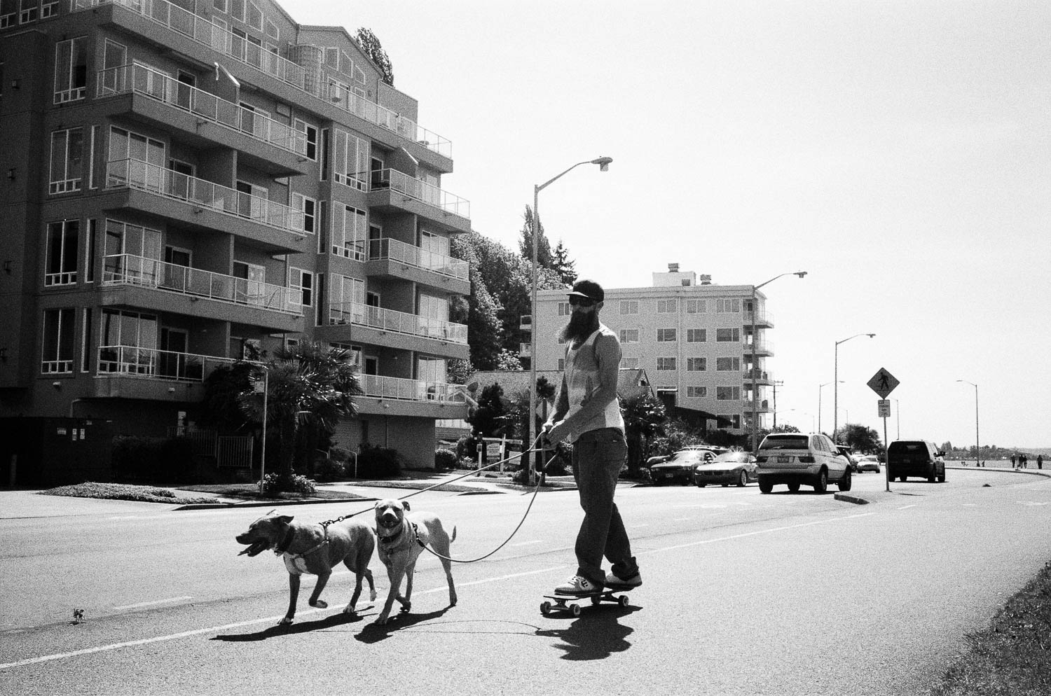 A bearded man on a skateboard being pulled by two dogs