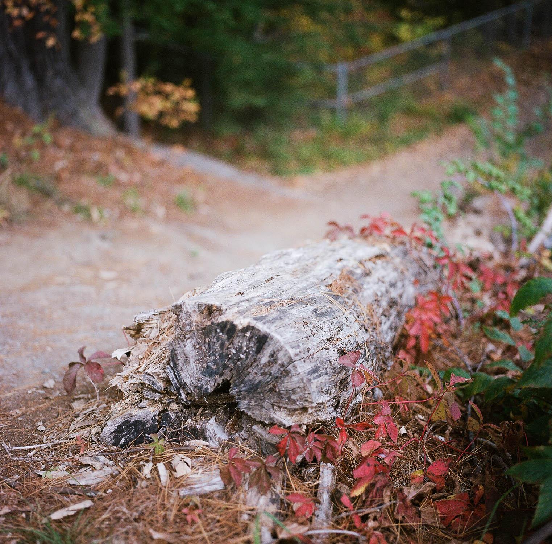 A fallen tree in autumn.