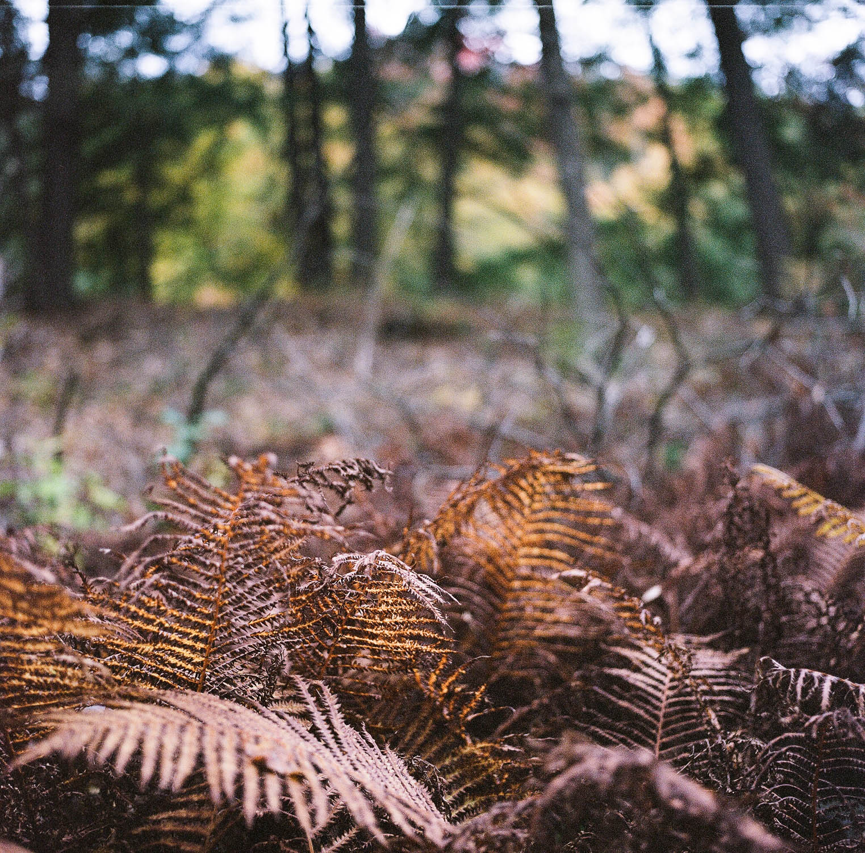 Orange ferns at Quechee Gorge