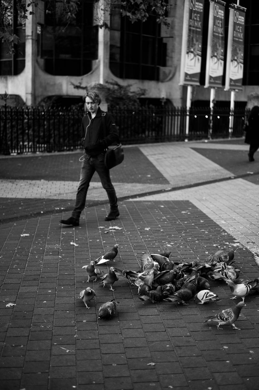 A man walks by a group of pigeons in London