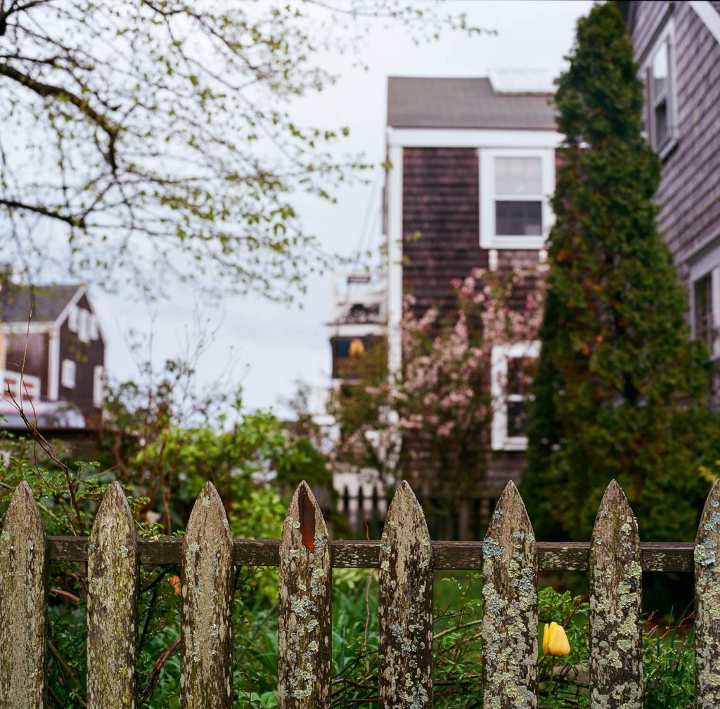 A mossy fence in Nantucket