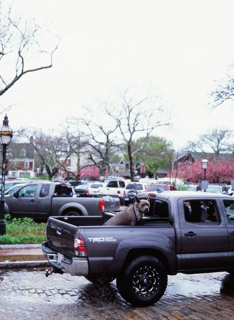 A dog in the back of a pickup truck in Nantucket, MA